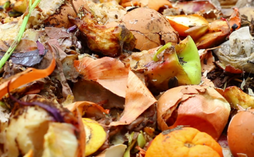 Wywóz odpadów biodegradowalnych
