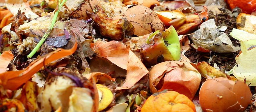 Wywóz odpadów biodegradowalnych - Żary, Żagań, Zielona Góra
